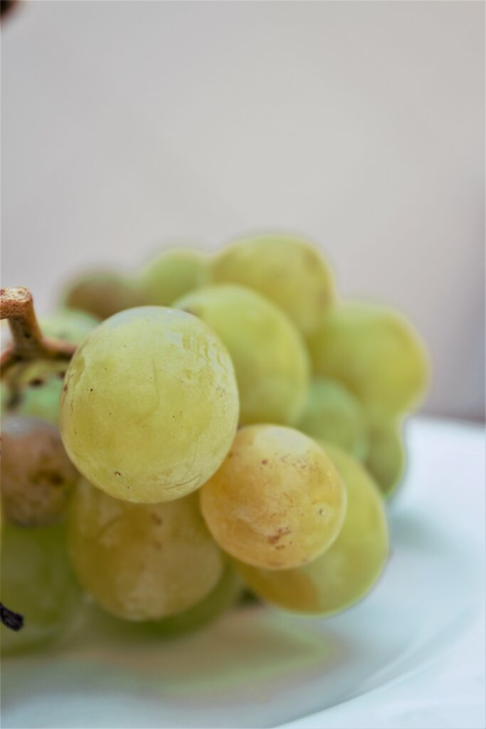 Grappe de raisins moscatel en Axarquia en Andalousie